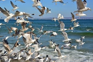 Nature Baltic Sea Gulls Swarm  - jggrz / Pixabay
