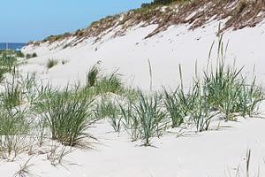 Dune Summer Sun Walk On The Beach  - KRiemer / Pixabay